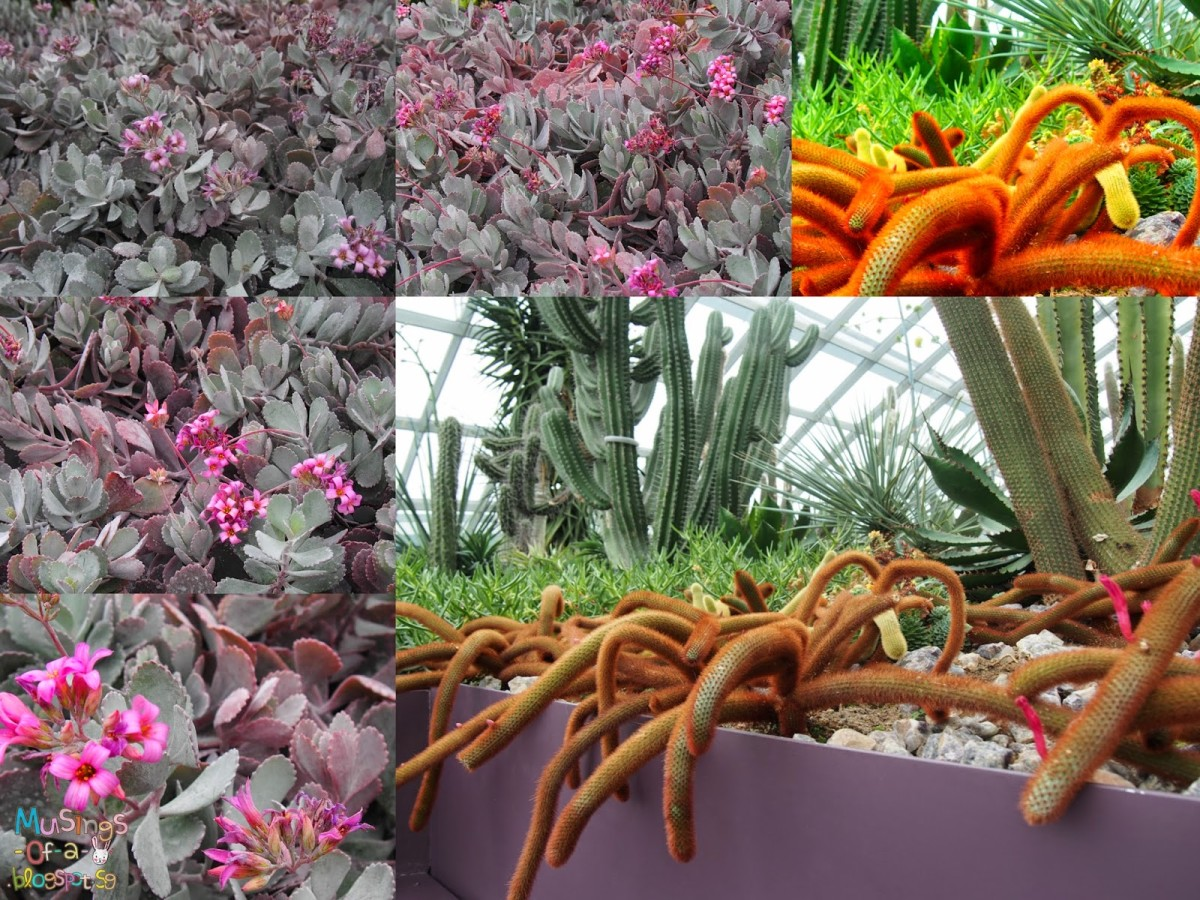 Tulipmania 2014 @ Gardens By The Bay (14 April - 4 May 2014)
