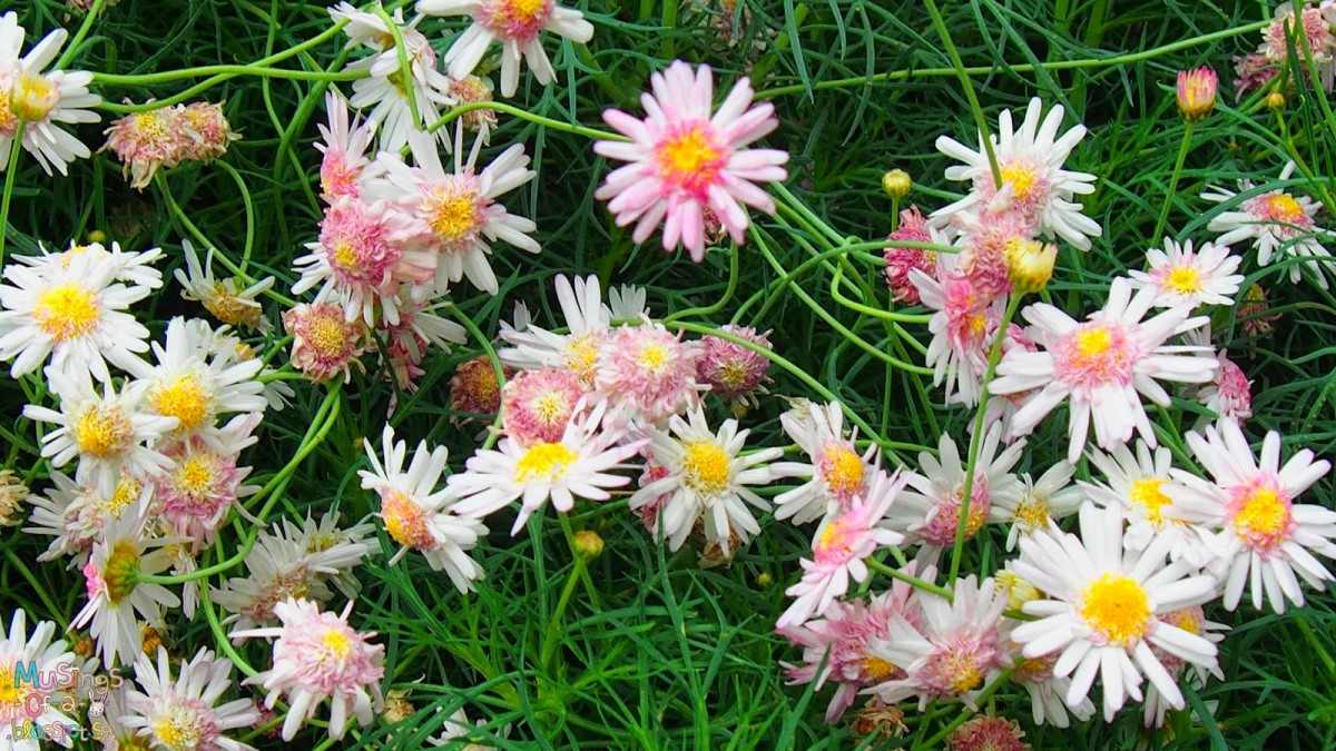 Pink, White and Yellow Flowers