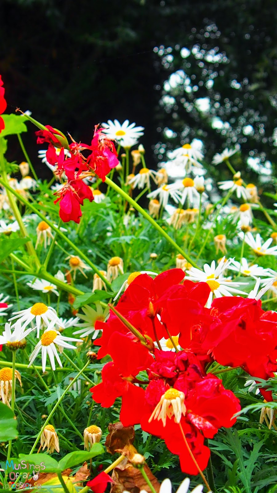 Red, White and Yellow Flowers
